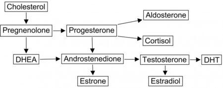 Relatie geslachtshormonen en cortisol